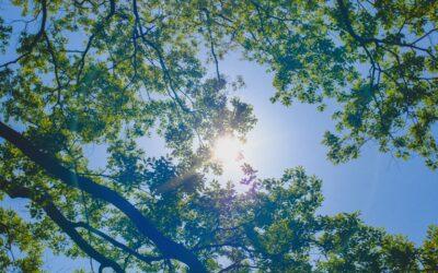 Bäume pflanzen mit dem Procedo Pflege-Audit